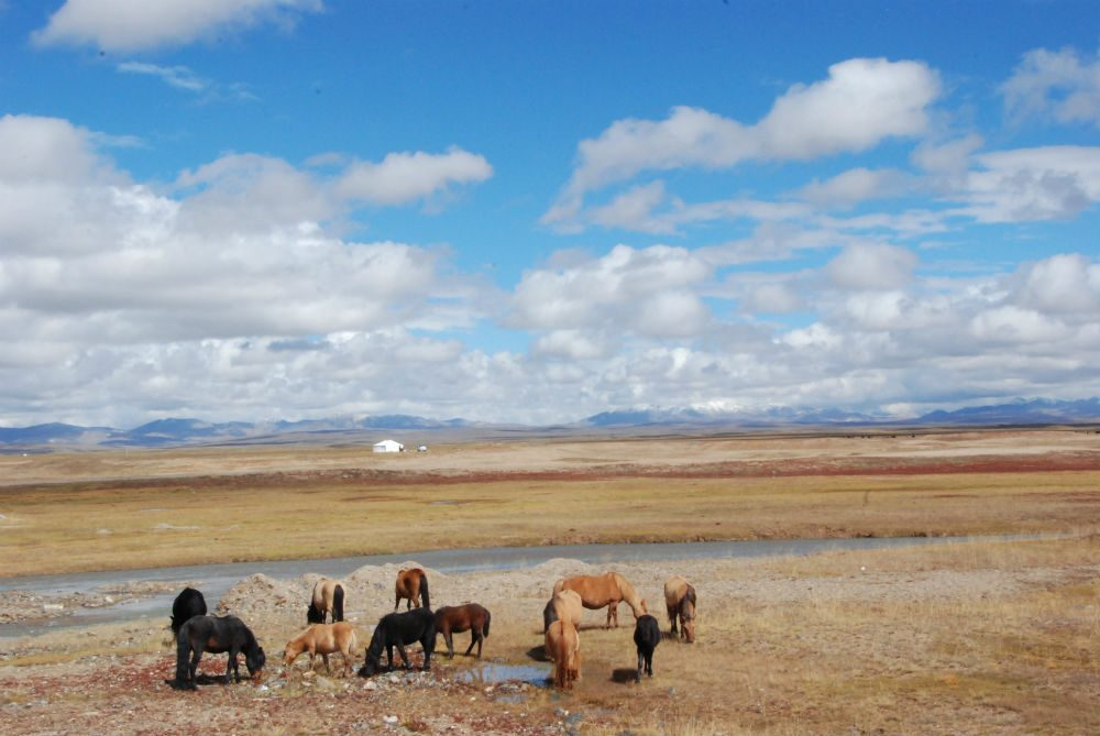 Wild horses in Hoh Xil, China