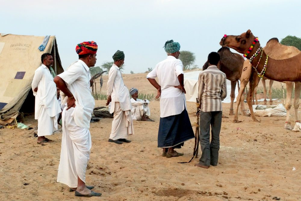 traders buy a camel at the Pushkar Camel Fair in India