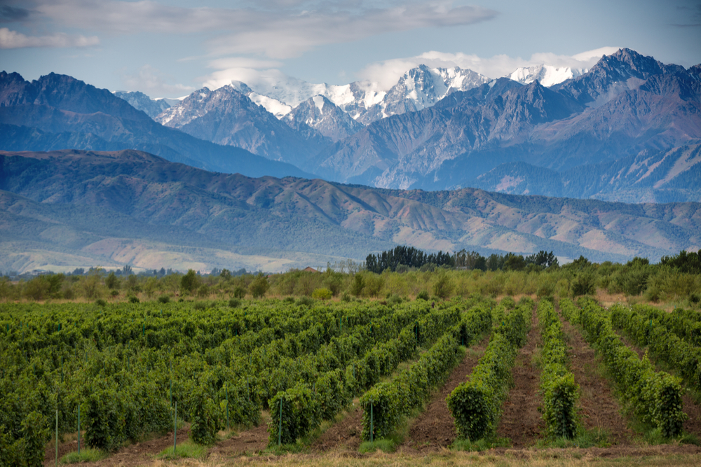 vineyards with snow-capped mountains in background Mendoza Argentina