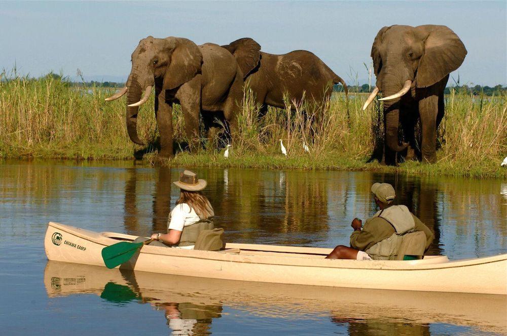 two people paddle past elephants on the Zambezi River in Chiawa, Zimbabwe