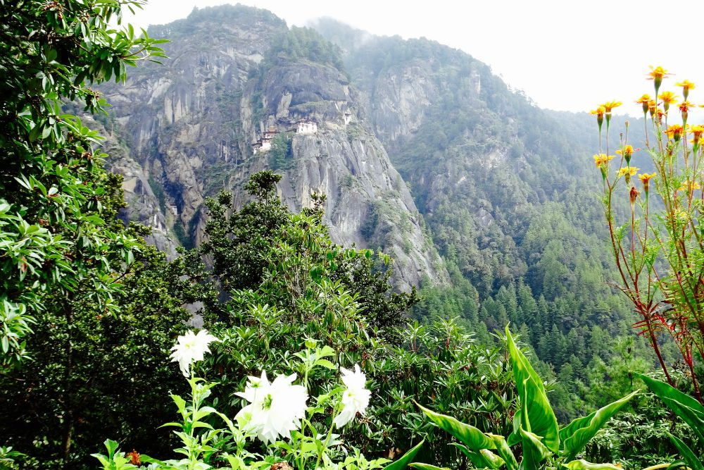 The Tiger's Nest monastery in bloom, Bhutan