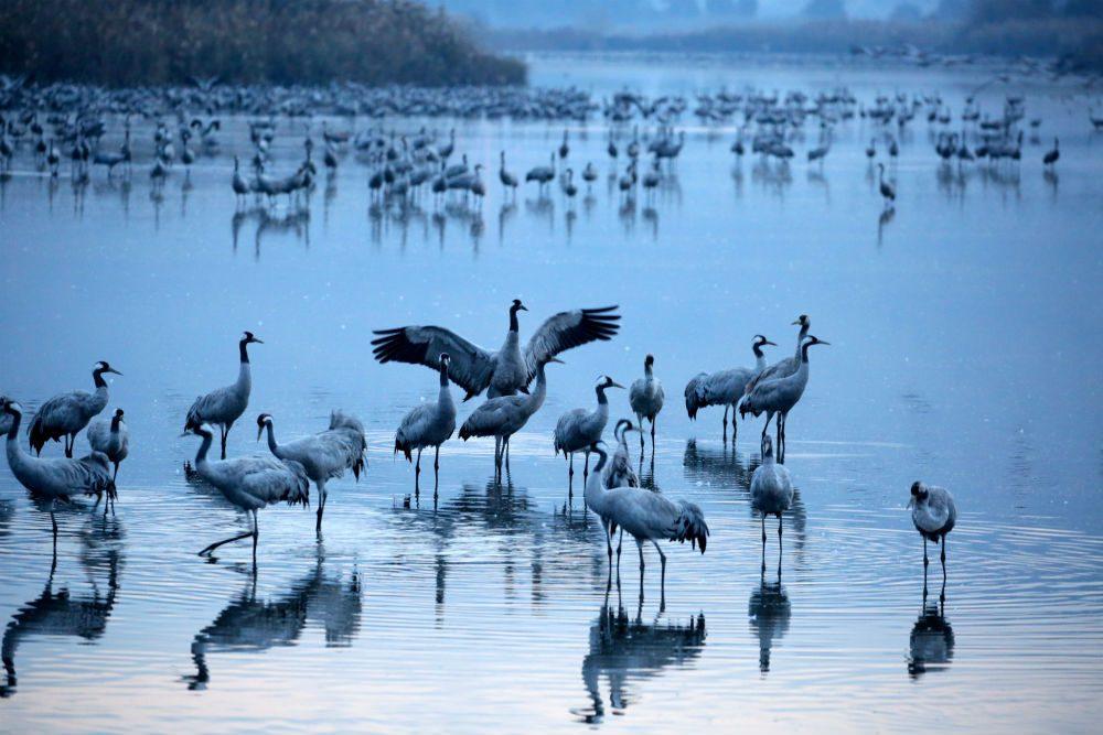 Hula Valley National Park bird migration Israel
