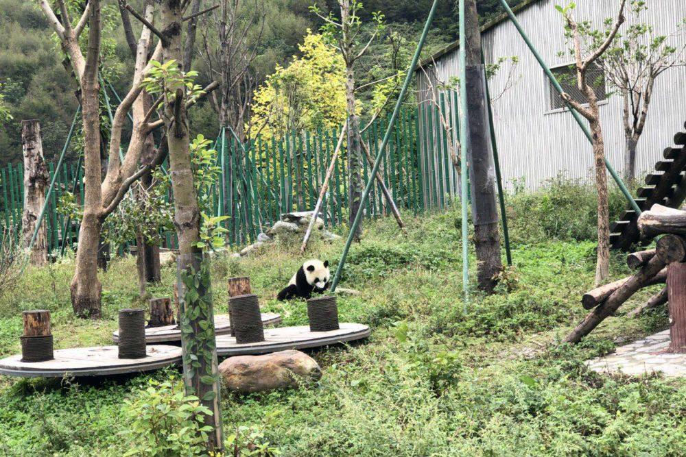 Panda nursery in Sichuan. Photo: WildChina