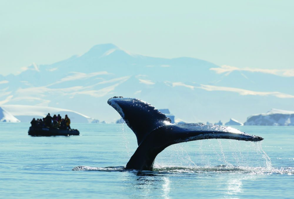 a whale's dorsal fin breaching the icy Antarctic water with a boat of tourists watching