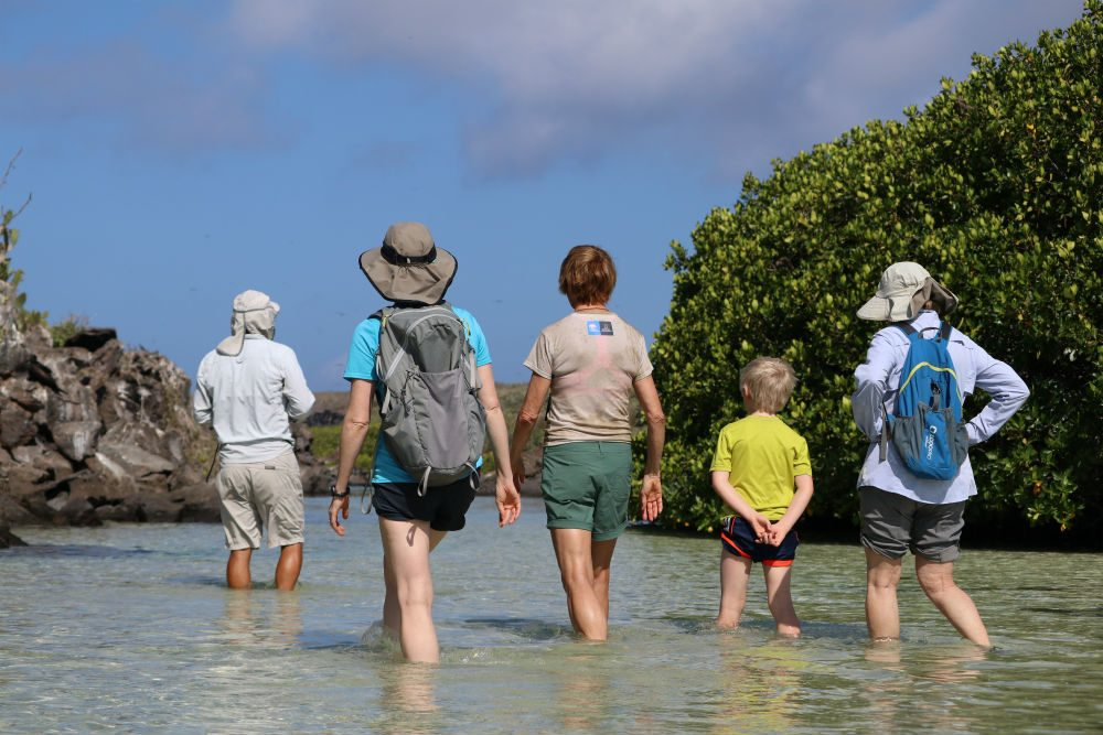 tourists wade through mangroves on Genovesa Island in the Galapagos Islands