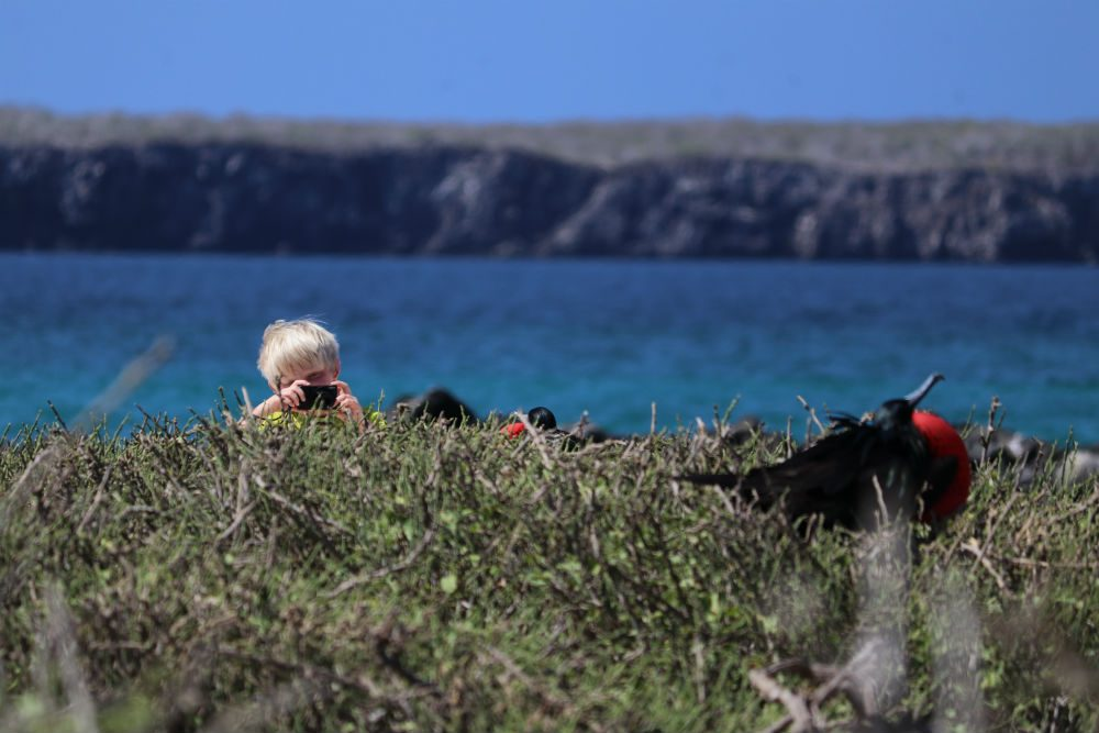 boy takes photograph of frigatebirds on Genovesa Island in the Gapalagos Islands