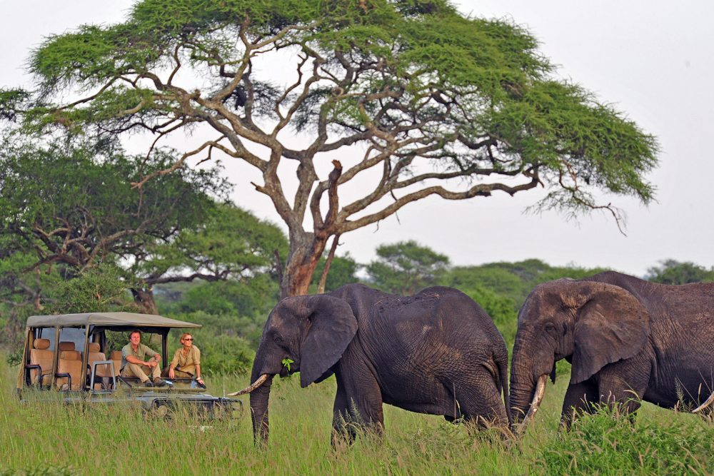 safari tourists in a jeep watching elephants pass in Tanzania
