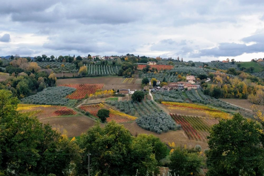 red vineyard in Umbria