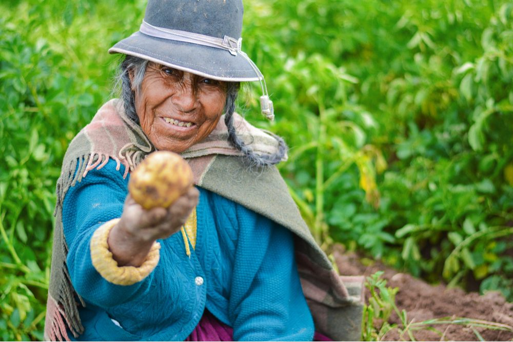 Old native american woman wearing authentic aymara clothes and showing fresh potato.