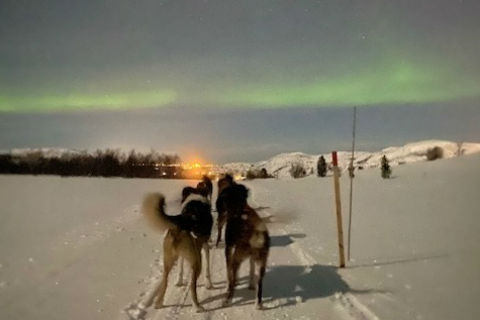 northern lights from a dog sled in Norway, with dogs in foreground and green lights in the sky