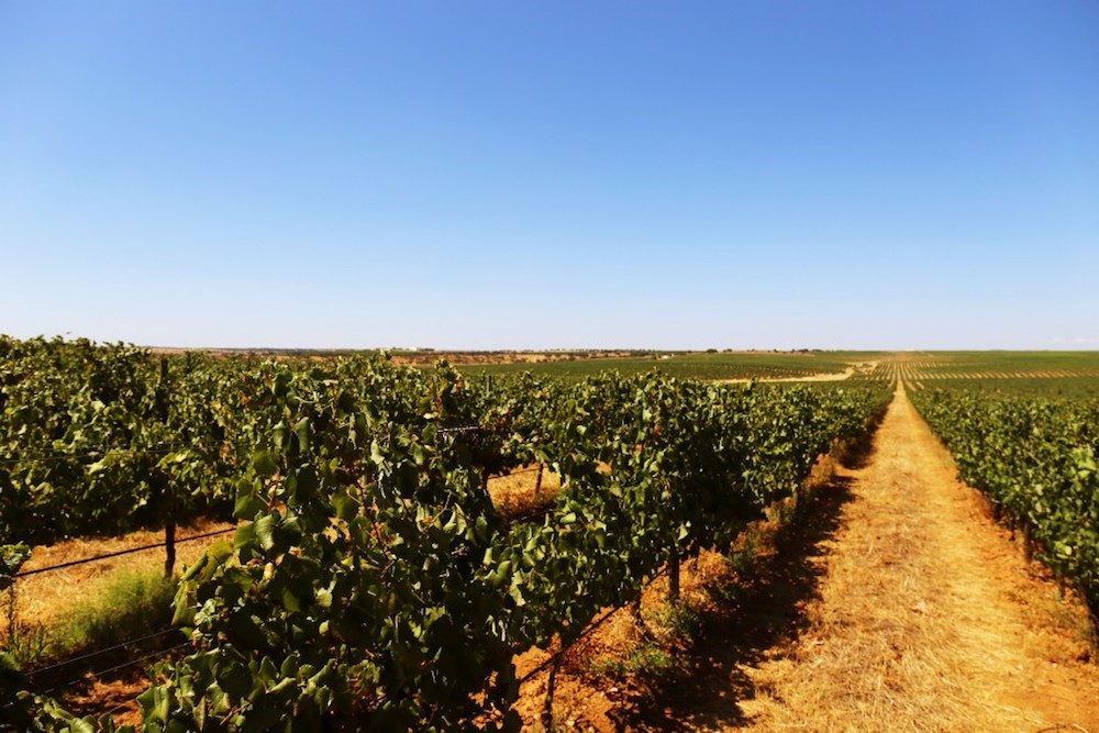 Herdade do Esporão vineyards, Alentejo Portugal