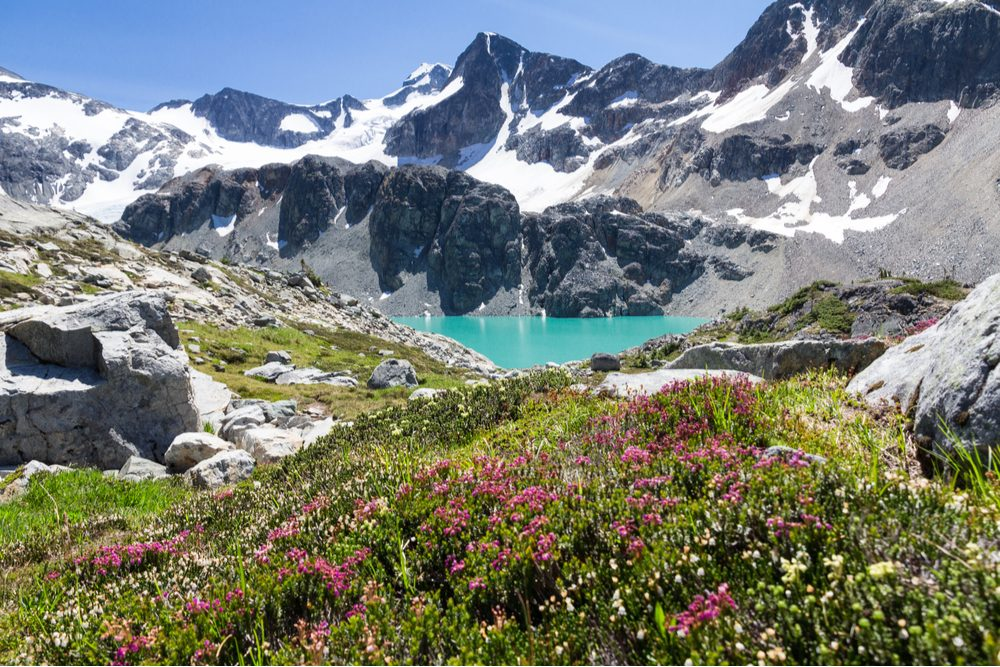 Turquoise Wedgemount Lake and wild alpine flowers, Whistler, British Columbia Canada