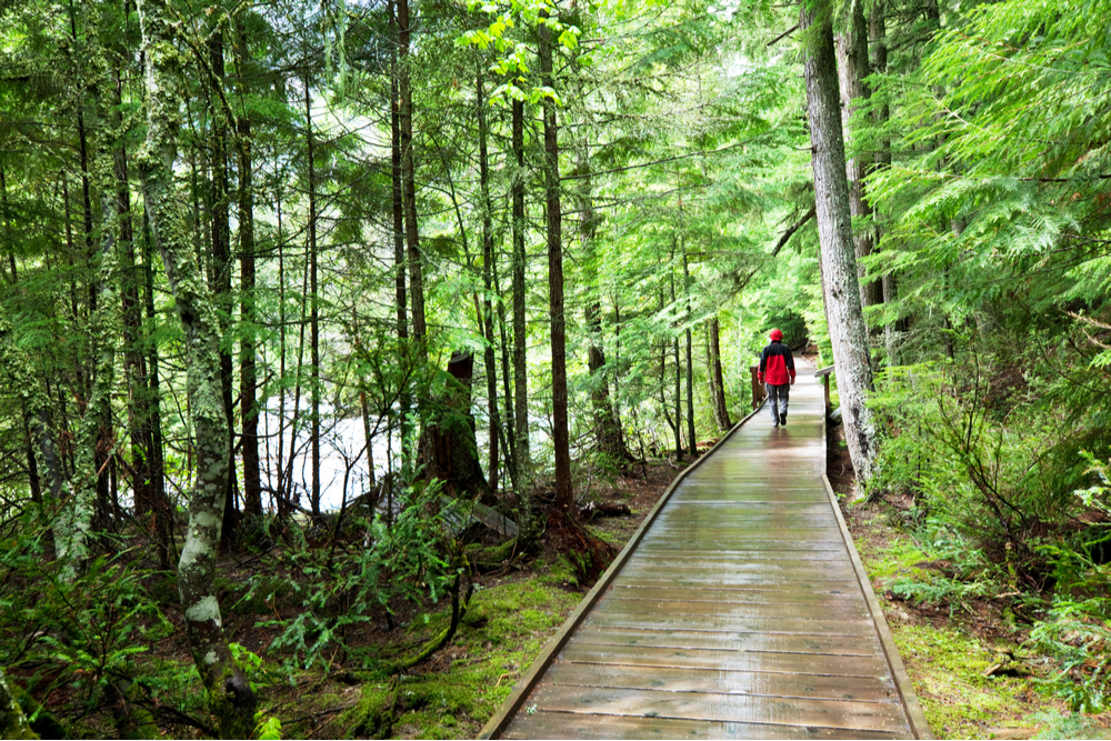 hiker on boardwalk trail surrounded by green rainforest Olympic National Park Washington state