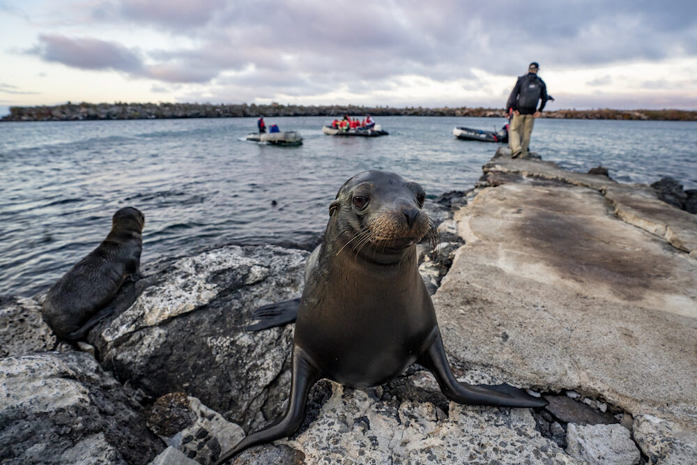 Galapagos sea lions and people in boats- covid CR Expedition Trips