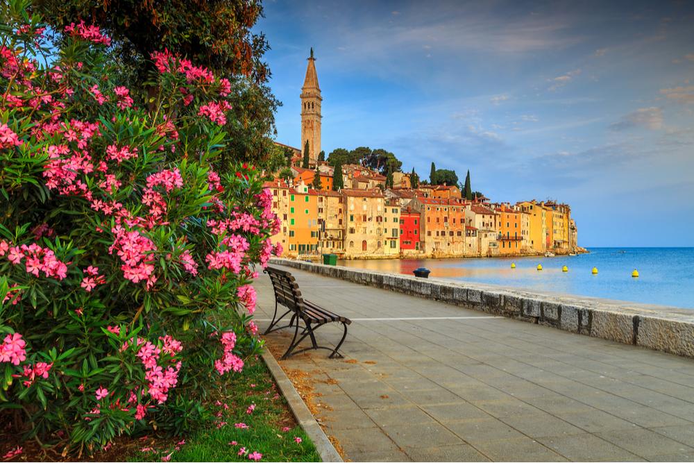 Wonderful romantic old town of Rovinj with beautiful pink oleander flowers,Istrian Peninsula,Croatia,Europe