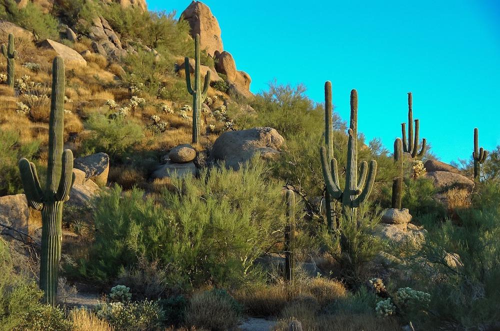 cactus-Scottsdale Arizona
