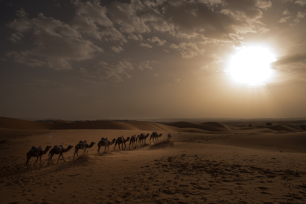 trail of camels in Moroccan desert sunset