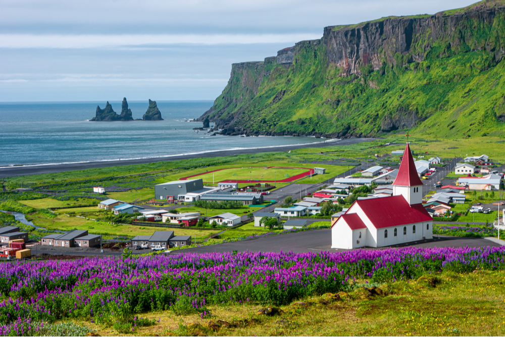 View of basalt stacks Reynisdrangar, black sand beach near Vik and violet lupine flowers and lonely church, South Iceland