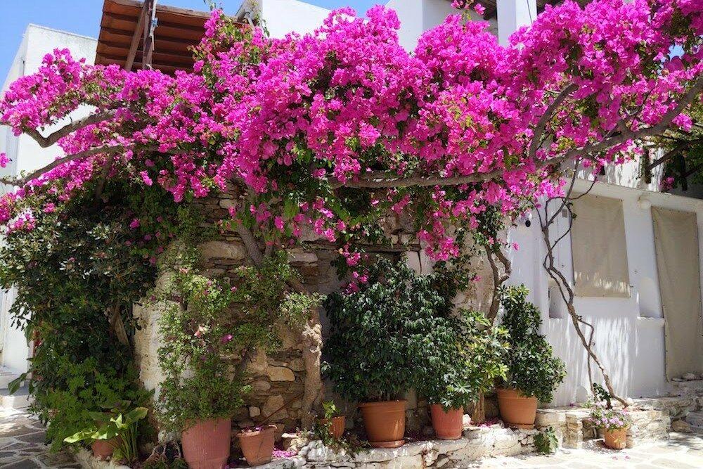 Paros Greece Prodromos Village (